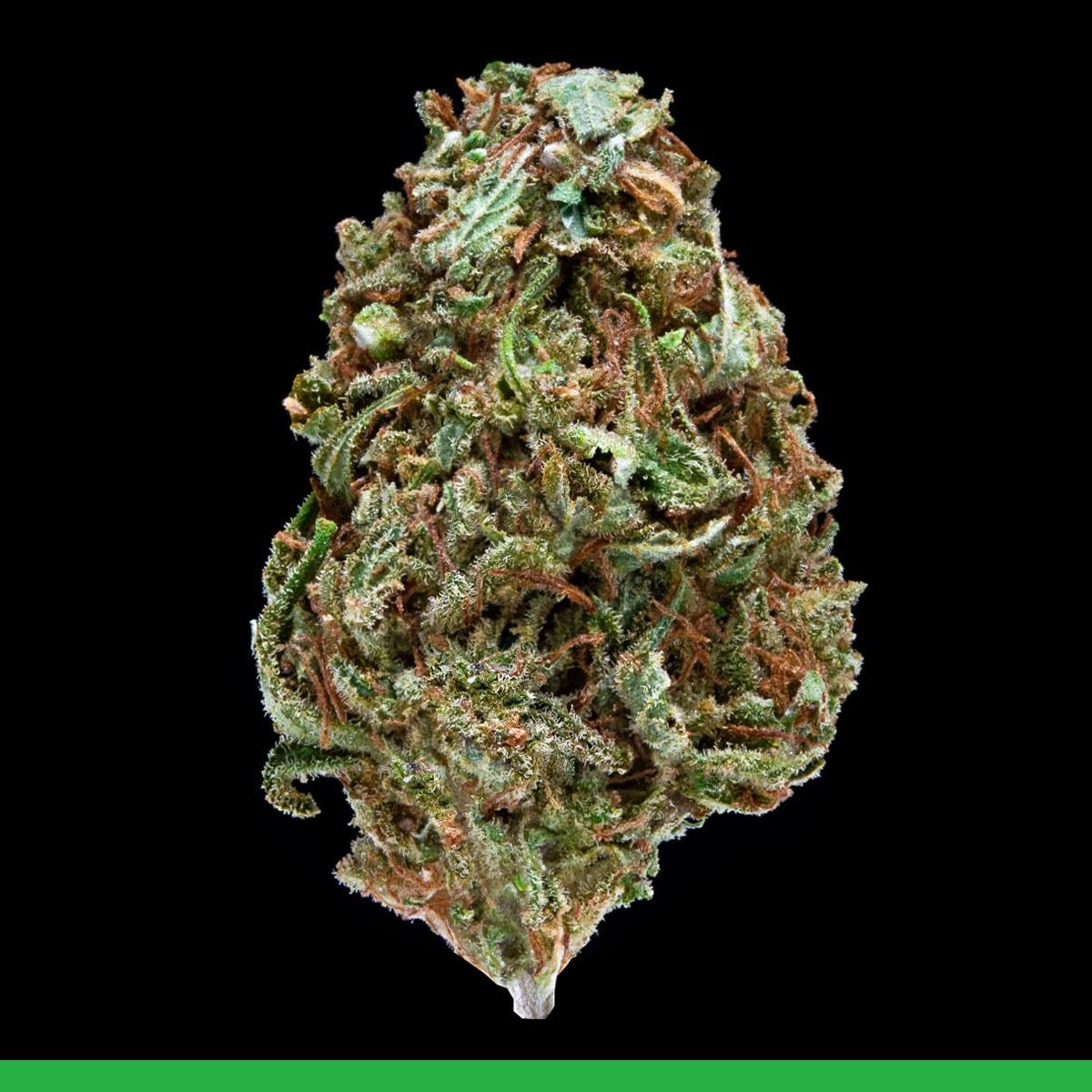 Kaya Weed Sativa Strain Bali Hai
