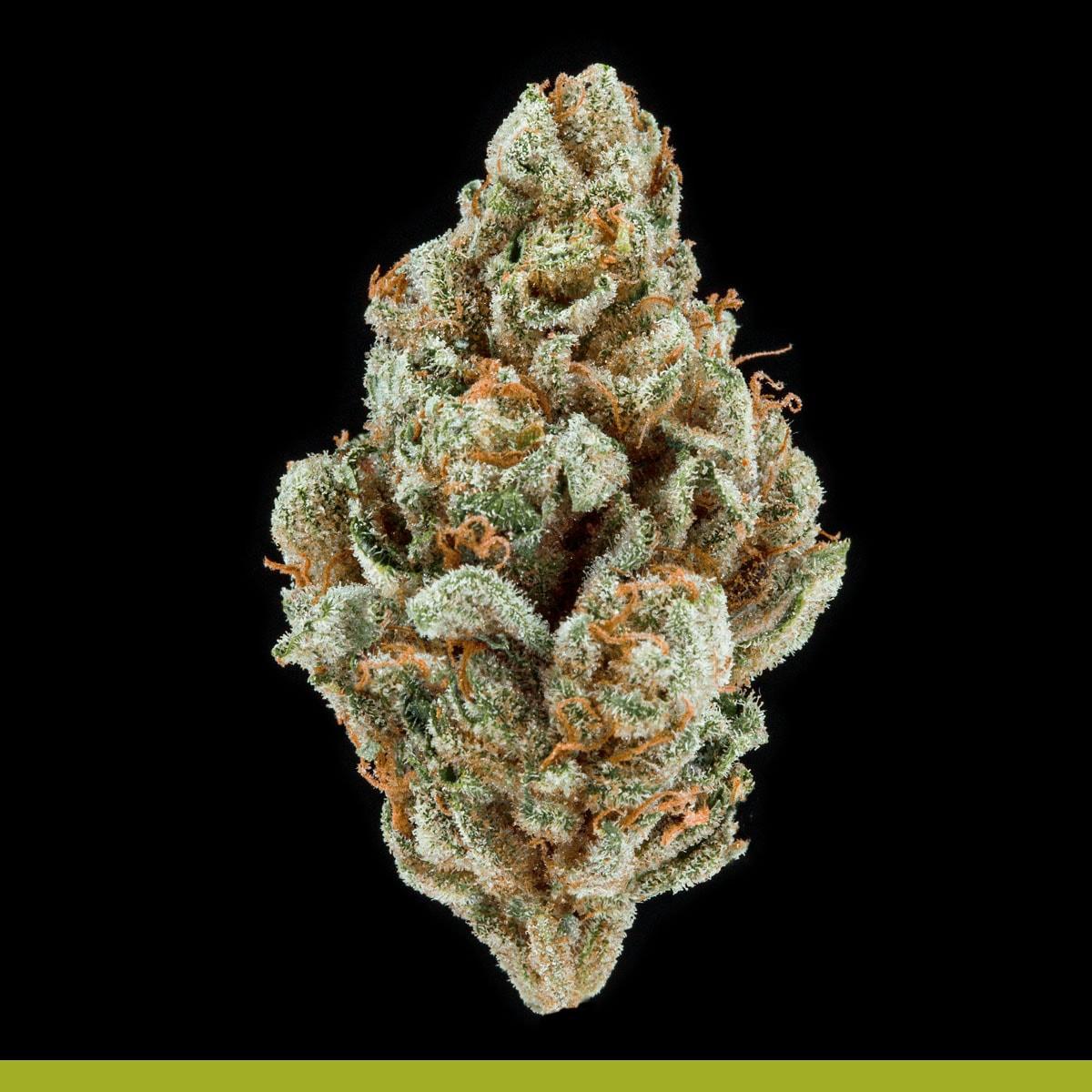 Kaya Weed Hybrid Sativa Flo