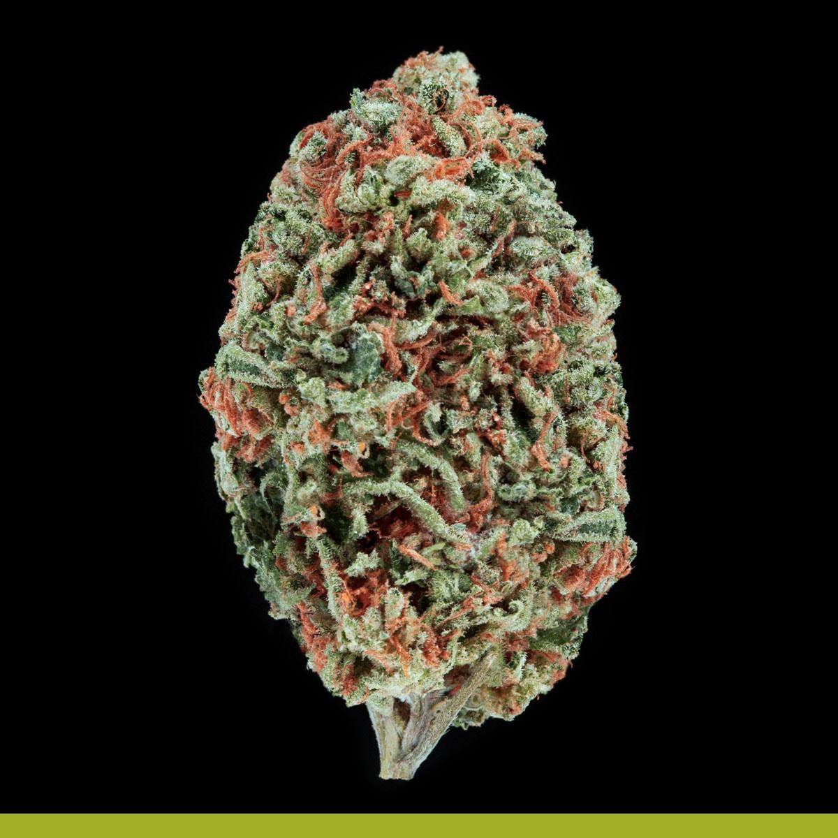 Kaya Weed Hybrid Sativa Island Girl
