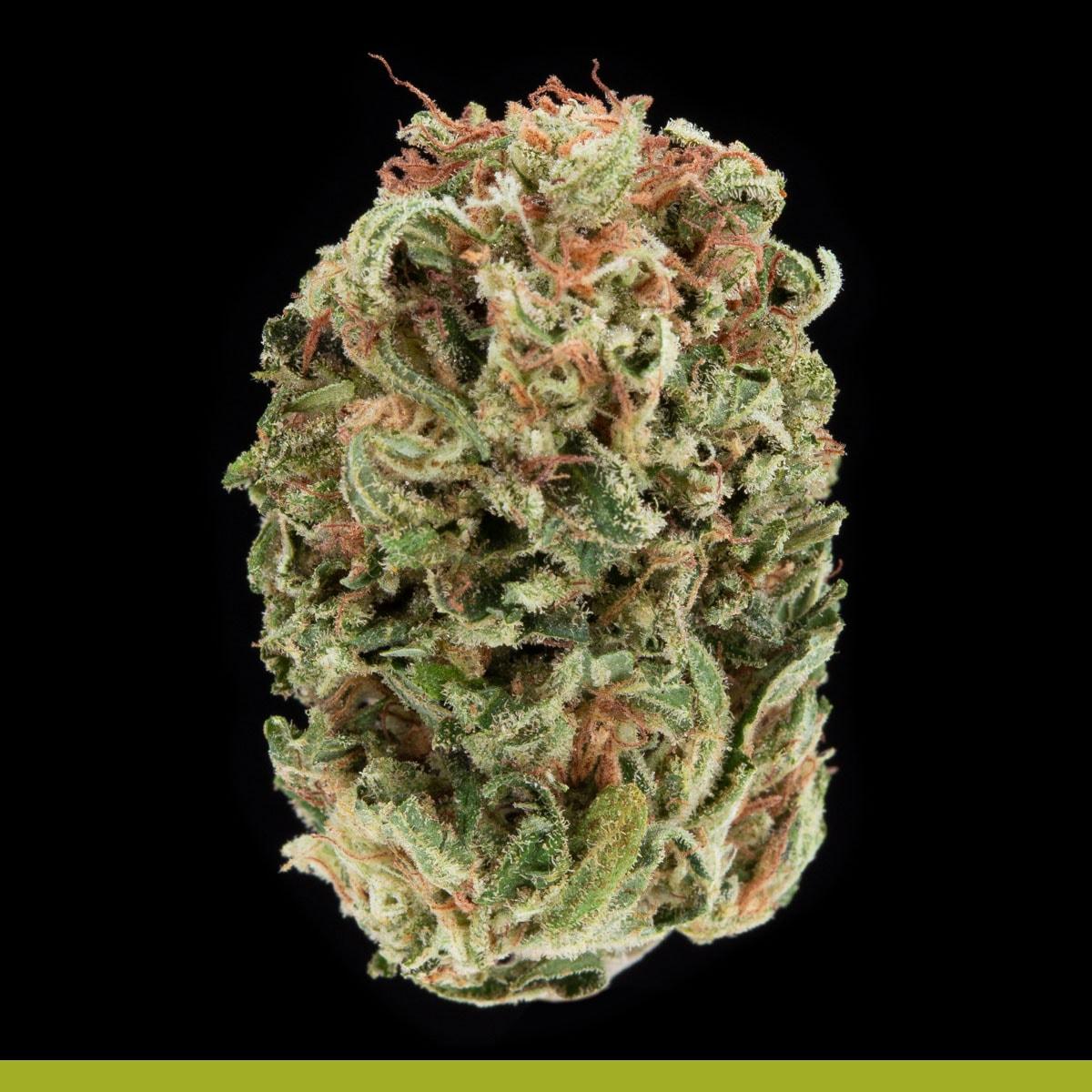Kaya Weed Strain Hybrid Sativa Mangonani