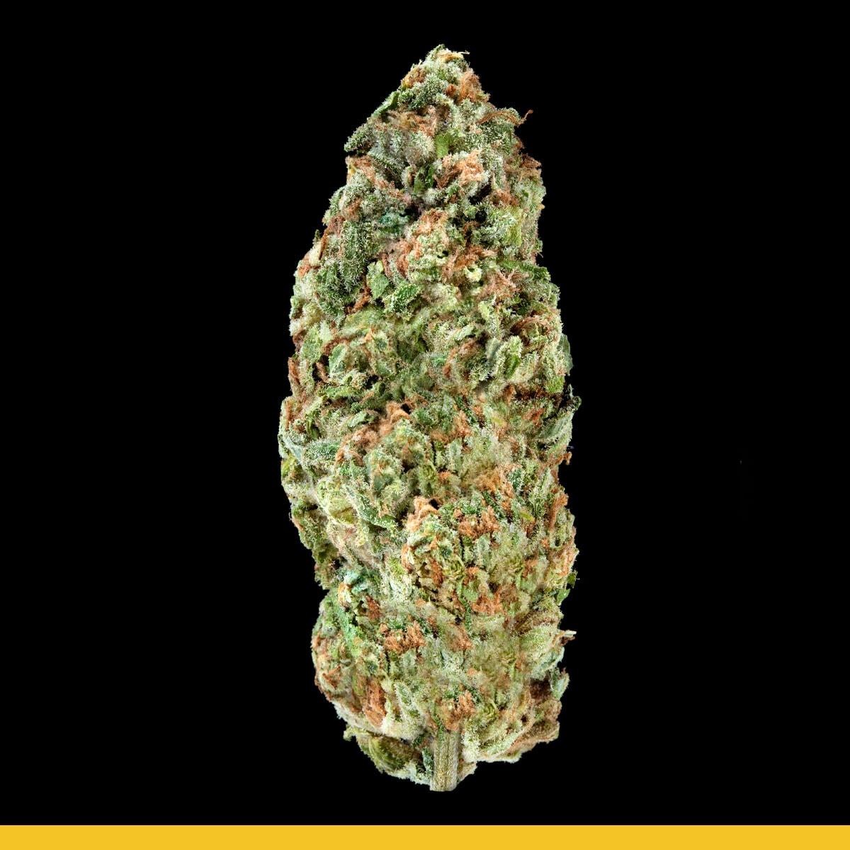 Kaya Weed Strain Hybrid Jamaica Skunk