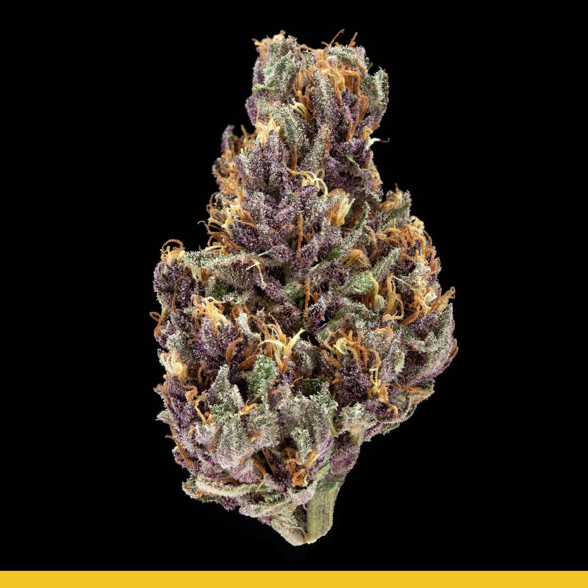 Kaya Weed Hybrid Purple Chem D.O.G.