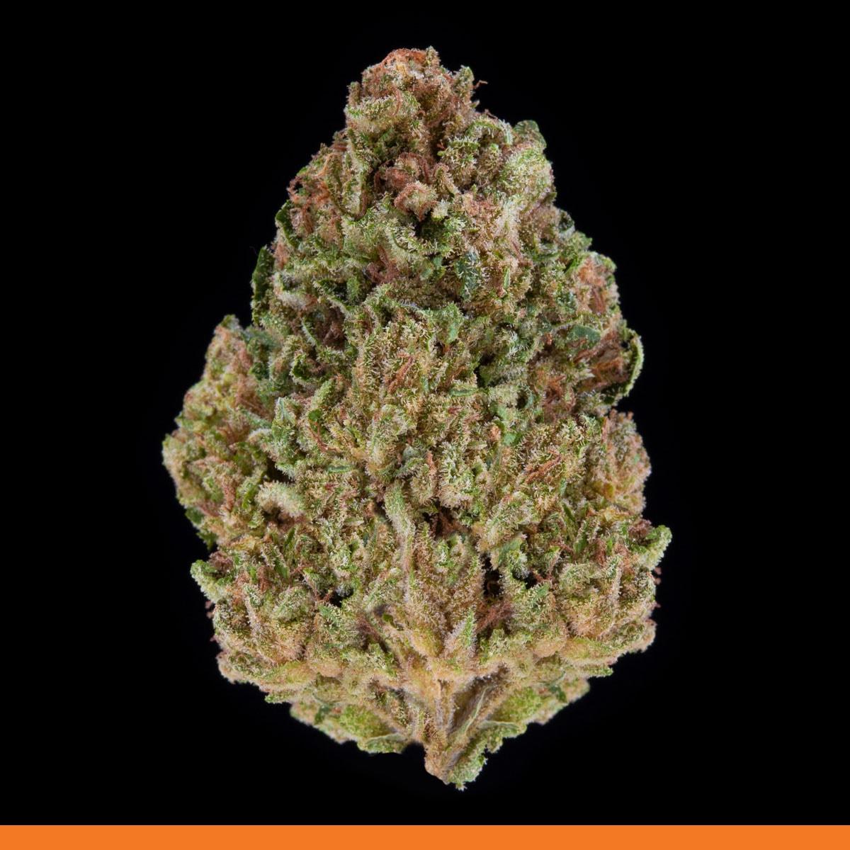 Kaya Weed Strain Hybrid Indica Unruly