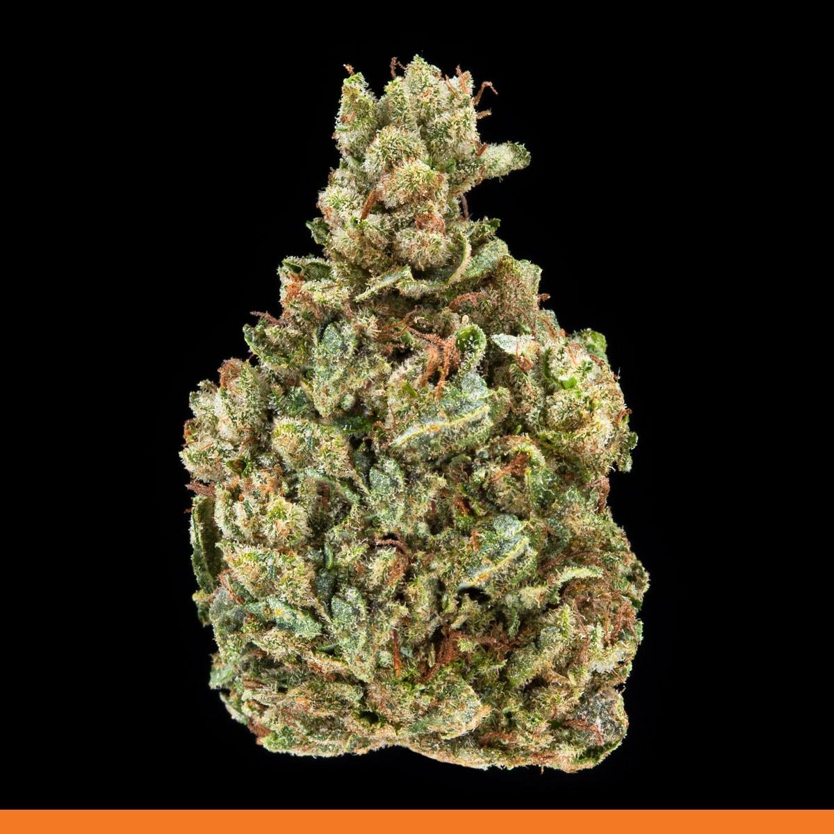 Kaya Weed Strain Hybrid Gorilla Glue 4