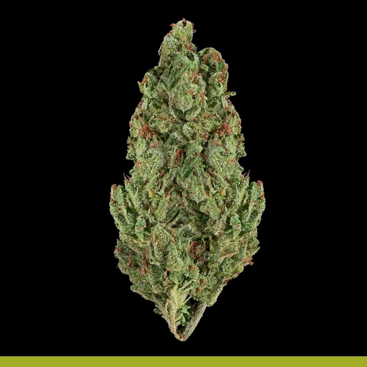 Kaya Weed Hybrid Sativa Kaya Haze