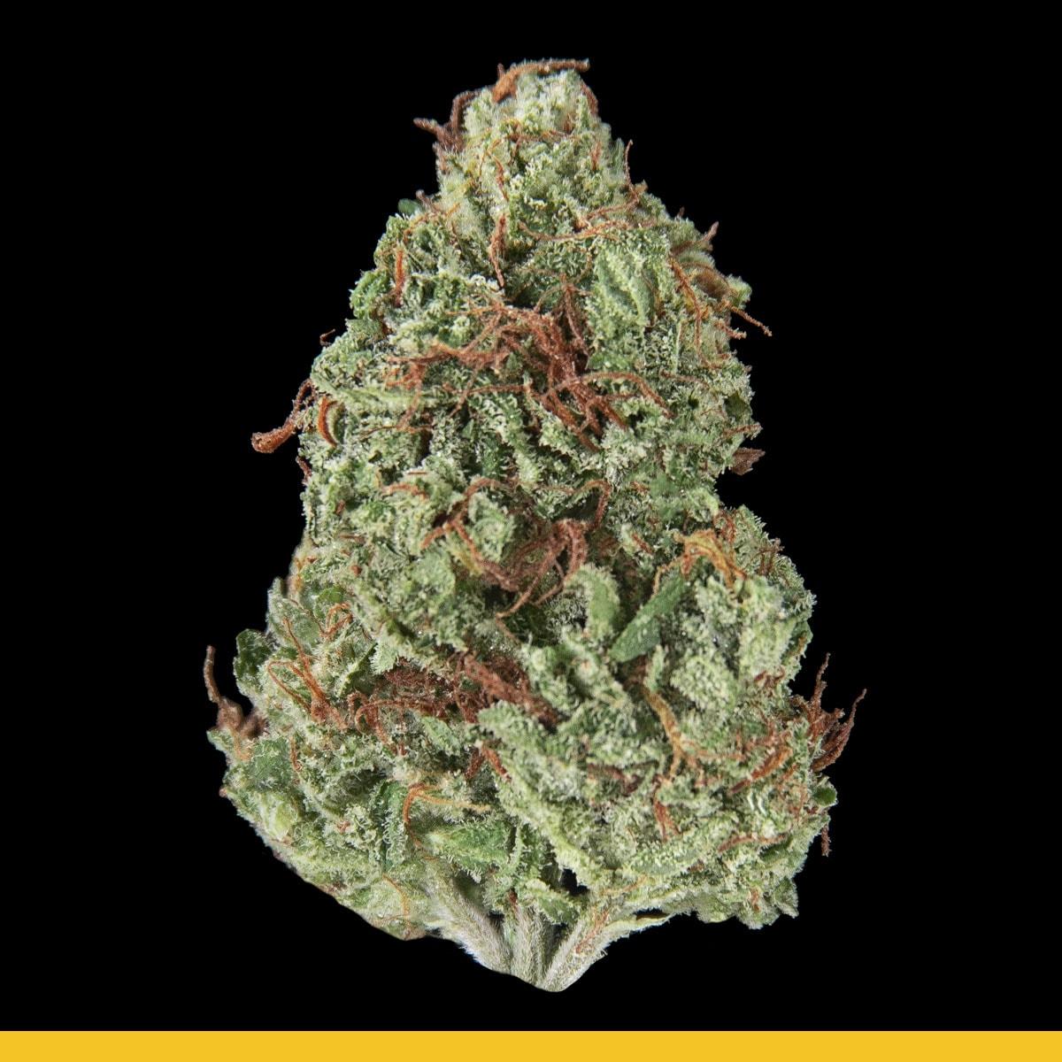 Kaya Weed Strain Hybrid Ganjie